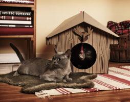 Интерьер для домашних животных