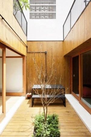 карликовое дерево в интерьере дома