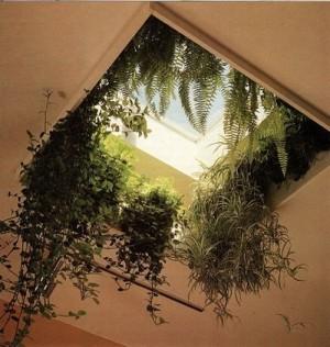 Растения свисающие с крыши