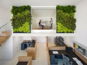 Стильный эко офис со стенами из растений