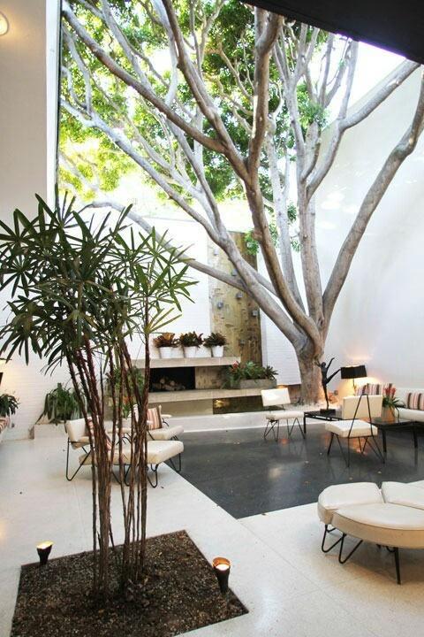 Деревья в интерьере дома