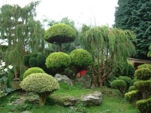 A-beautiful-garden-showcasing-the-wide-variety-of-plants-one-can-use