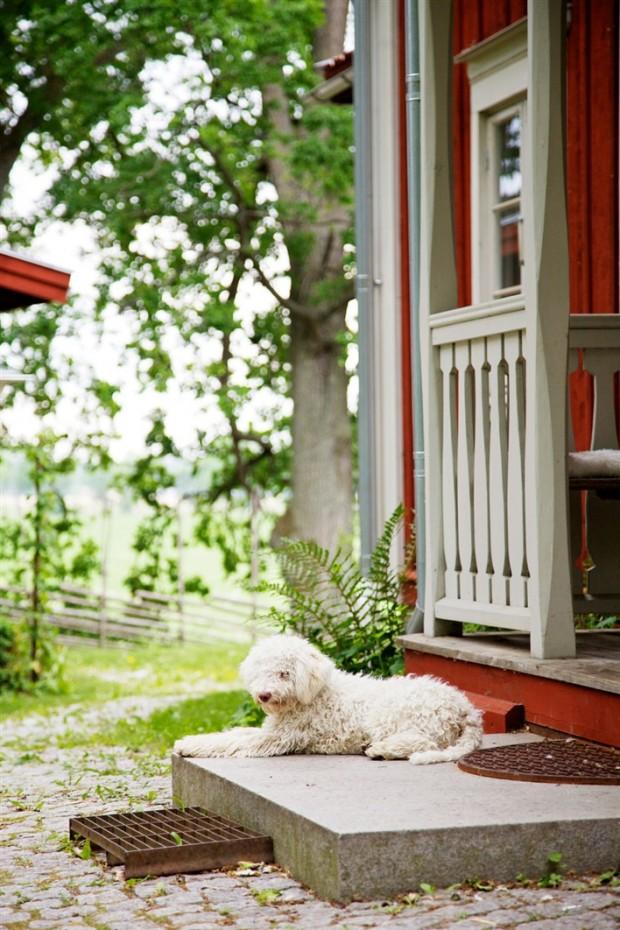 dom_za_gorodom11
