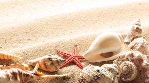 sea-shells-seashells
