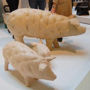 pig021