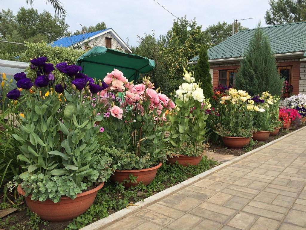 Эхо москвы сад огород