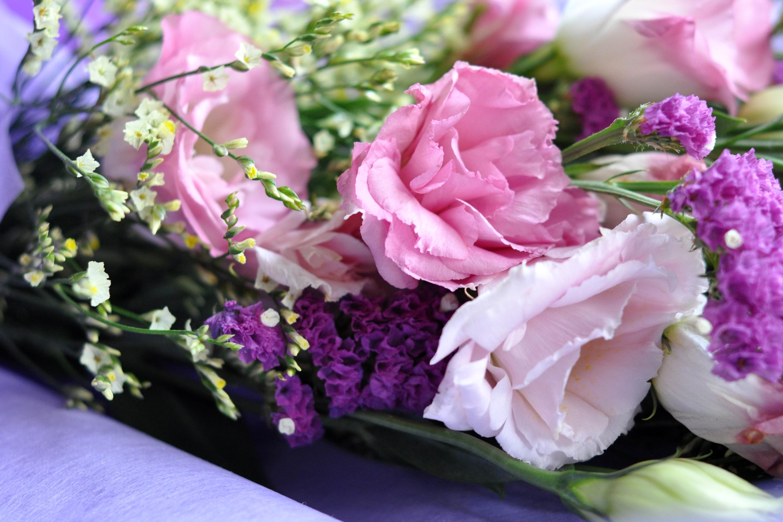 обои для рабочего стола эустома цветы № 634146 бесплатно