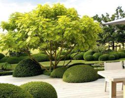Кустарники в вашем саду