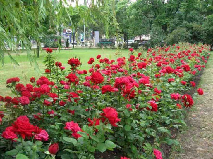 Гигантские цветы из бумаги мастер класс с пошаговым 58