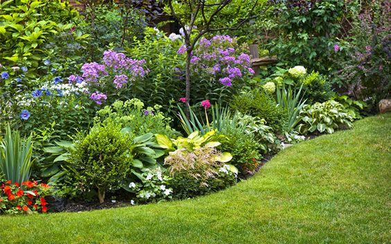 кустарники для сада
