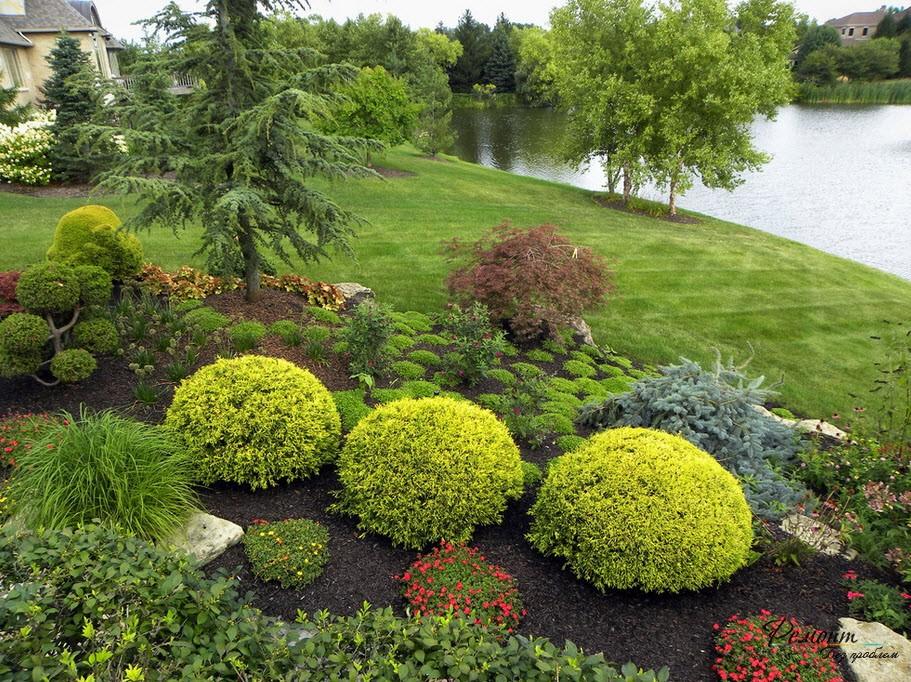 Фото растений ландшафтного дизайна сада