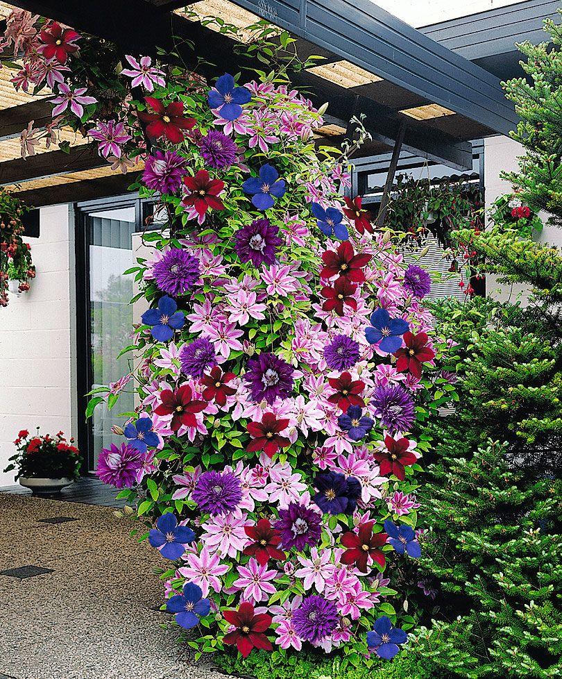 Оформление вьющихся цветов на даче