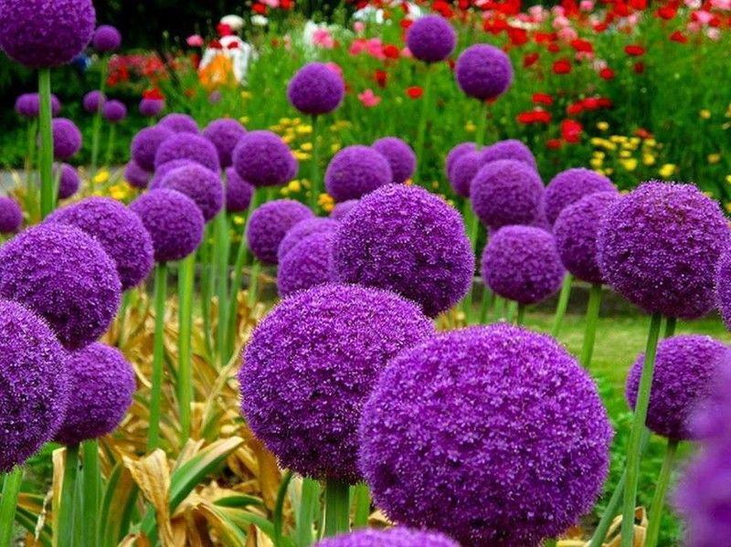 Цветы осенние уличные