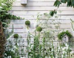 Белые цветы для сада: торжество невинности и изящества