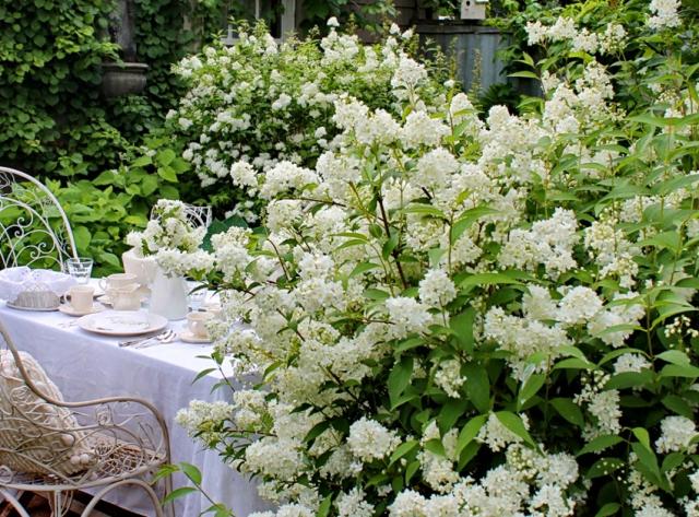 В саду белые цветы