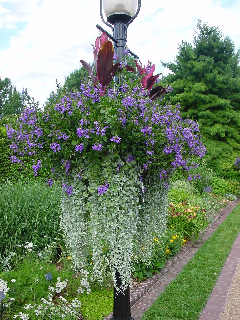 Ампельные цветы для сада названия фото