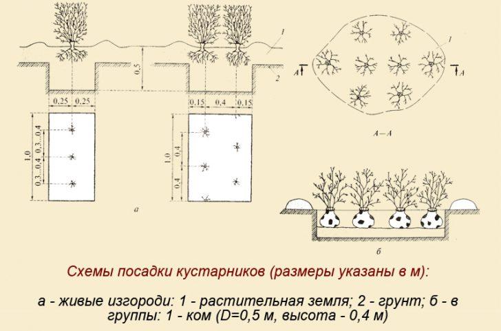 деревья и кустарники вдоль забора и дорожек