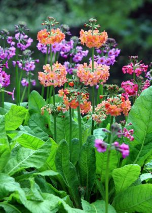 cvety-na-dache-35