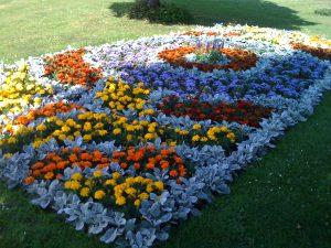 lilys-flower-bed
