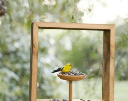 Кормушка для птиц – украшение сада