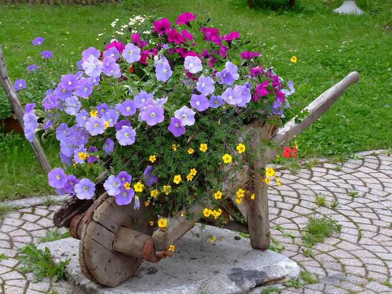 Фото красивых цветочных клумб на даче своими руками 64