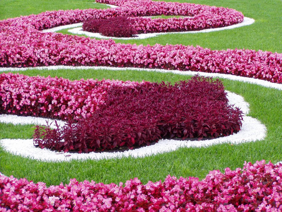Какие цветы для клумб