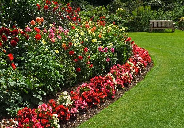 низкорослые цветы для клумб
