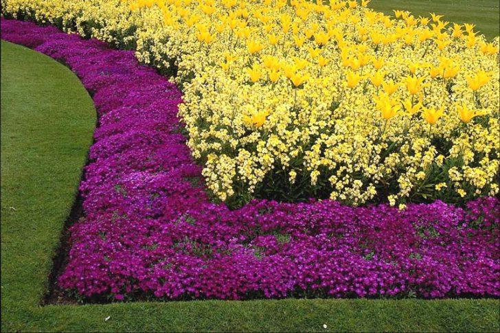 Бордюрные цветы садовые