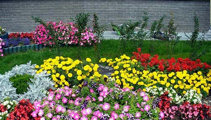 Какими цветами оформить клумбу на даче