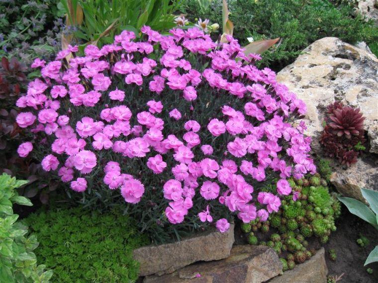 Многолетние садовые цветы посадка