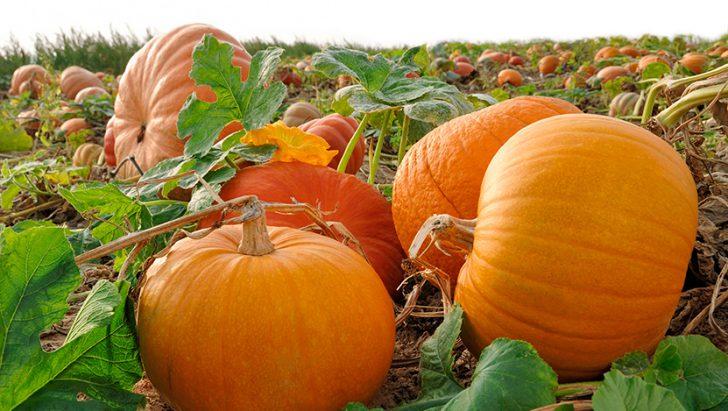8-12-728x411 Осенние поделки из тыквы своими руками: 12 красивых и оригинальных поделок из тыквы для детского сада и школы