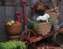 Работы на дачном участке в осенний период: все, что необходимо сделать