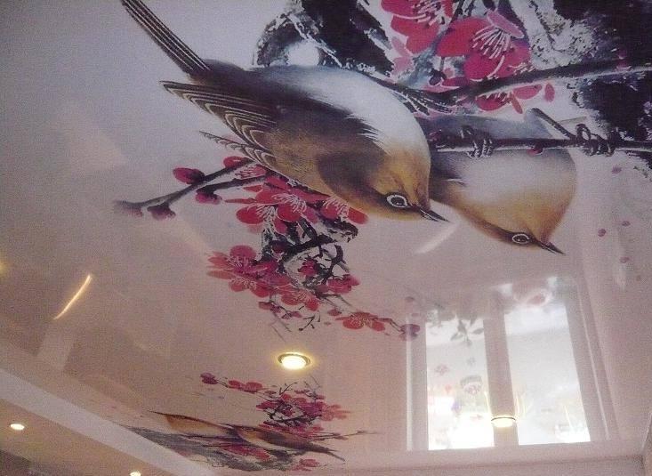 Картинки птиц на потолке