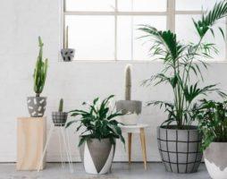 Кашпо для цветов: стильно и со вкусом