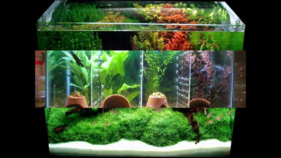 Как украсить аквариум своими руками фото 41