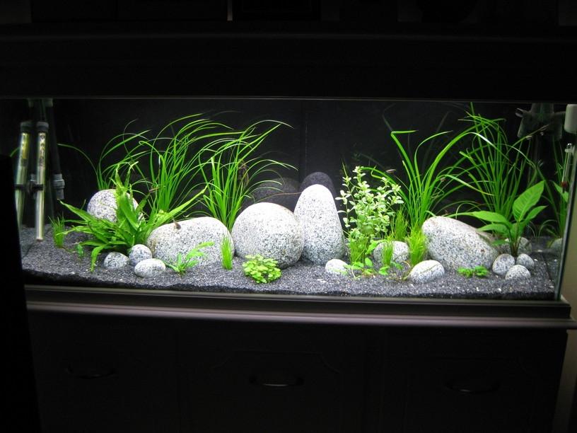 Оформление аквариума своими руками фото брежнева