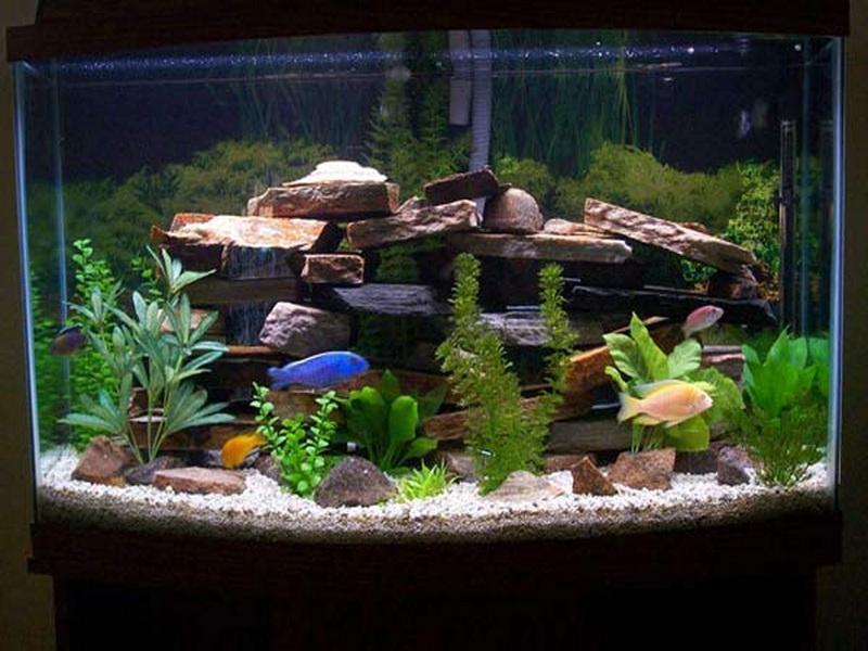 Своими руками декорирование аквариума 21
