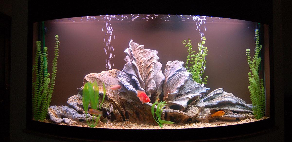 Камни в аквариум своими руками в домашних условиях 66