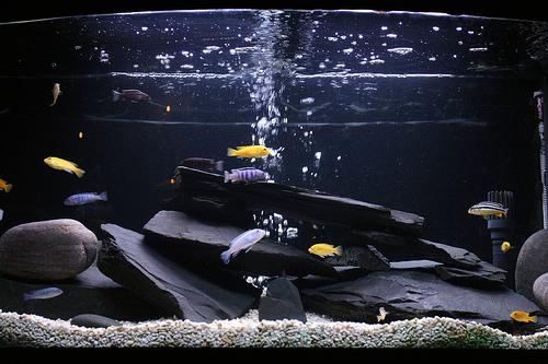 Дизайн из камней для аквариума