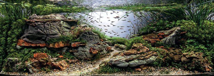 фото оформление аквариума своими руками