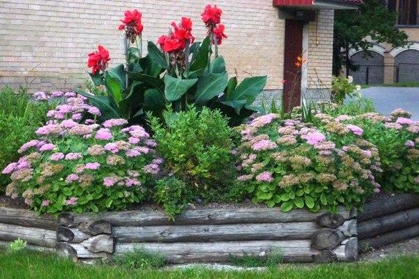 Клумбы с каннами цветы