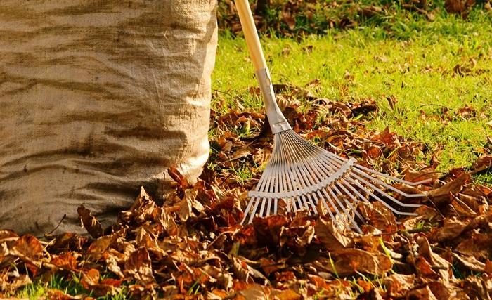 Уход за газоном осенью и весной, календарь работ - фото примеров