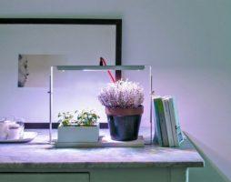 Какие виды фитоламп используют для подсветки растений и рассады