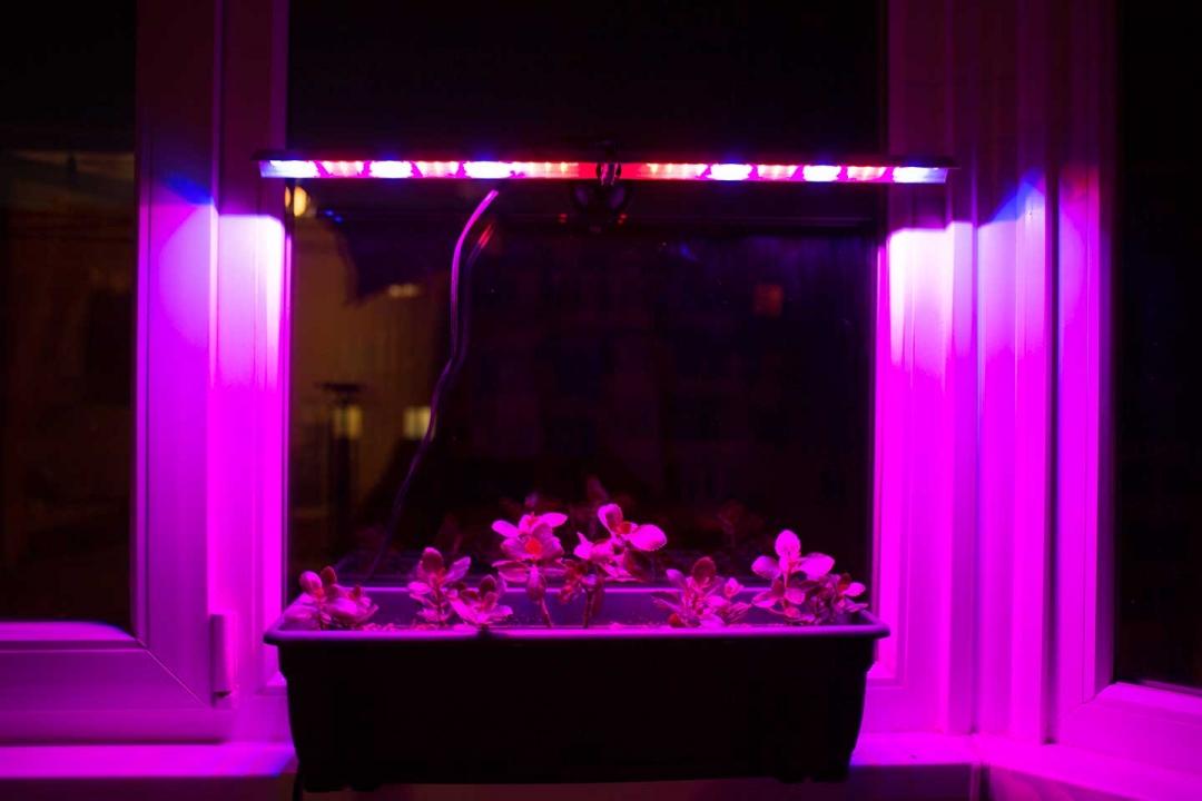 Лампы для досветки рассады 14