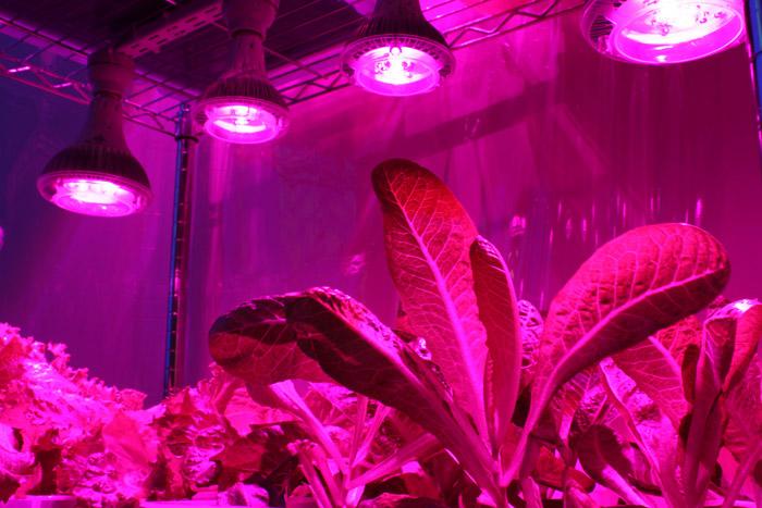Лампа для освещения растений