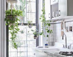 Лучшие ампельные цветы для кухни. Фото растений, описание и уход.