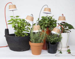 Освещение растений – лампы и подсветка