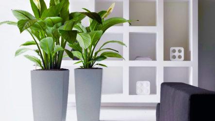Цветы для украшения кафе, ресторана и офисов. Фото растений, описание и уход.