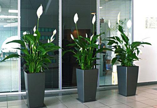 цветы для офиса