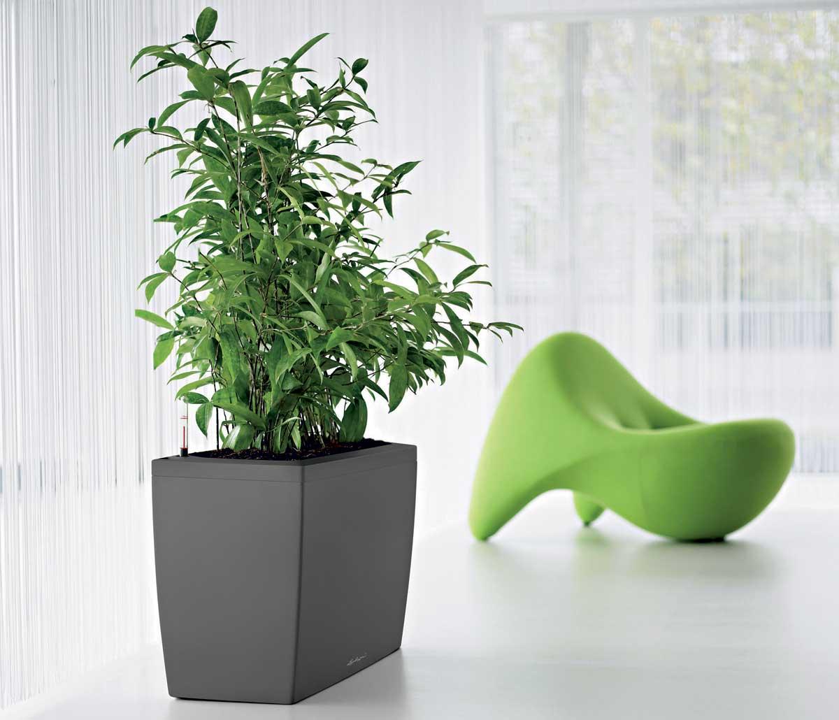 Букеты, купить офисные растения великие луки